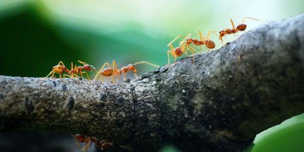 macro-photo-of-five-orange-ants-842401